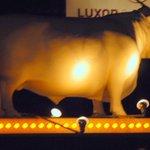 """THE """"Golden Steer"""""""