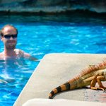 Iguanas by the pool