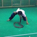 kysser en kongekobra og man kan tydeligt se, han har respekt for slangerne