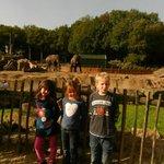 Voor de olifanten