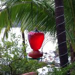 feeder for birds hummingbird