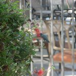 A humming bird joined us on the terrace for breakfast