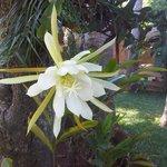 nuestra floricultura