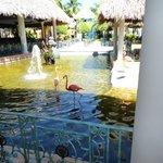 Near main lobby with flamingo's