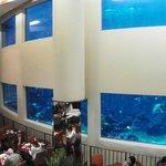 """Dinning room """"Oceanarium"""""""