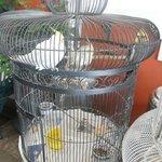 Especies de aves en exhibición
