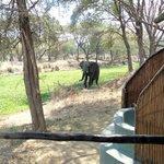 Außenbad mit Blick auf Lagune und Elefanten