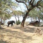 Einer der Elefanten auf dem Gelände