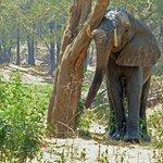 Elefant ganz nahe bei