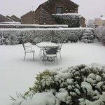 Snowy tea garden