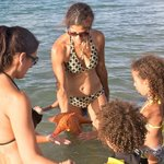 Finding Starfish, Sanddollar, Sea Shells