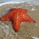 finding Starfish