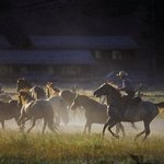 Horses Moving Dust