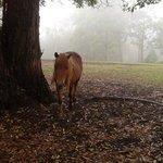 very friendly pony