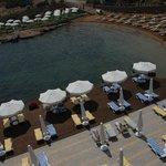 shayna beach club resmi