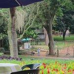Fabulous garden setting