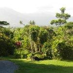 De tuin van Daintree Rainforrest.