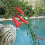 Fleurs près de la piscine