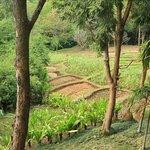 resort has small field