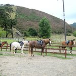 our horses all geared up waiting for us!