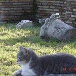 antico gatto romano..............