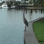 heron that came to visit