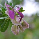 Blumen im Garten von Meike