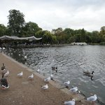 لقطة في حديقة هايد بارك لندن تقع بجوار الفندق