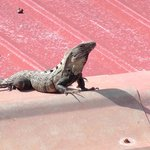 Director of Security, Mr. Iguana