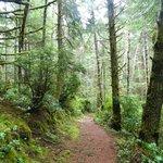 Hobbit trail, Florence