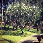 Beautiful garden of Victoria Hotel