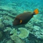un abitante della barriera corallina