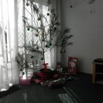 Our Christmas Tree - as sapling from nearby bushland.