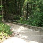 steps down to Cedar Falls