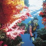 Scuba Diving - - Soft Corals