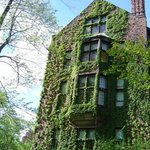 Side of buidling covered in ivy