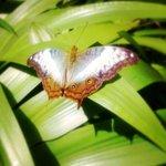 бабочек в саду много