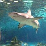 shark in tunnel