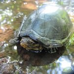 Turtle on Trail