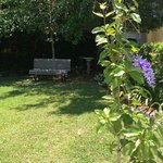 Cool, shady corner in garden