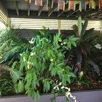 Surrounding tropical gardens