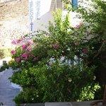 Jardin fleuri de l'hôtel