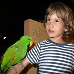 Parrot Luis