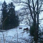 Nature en hiver