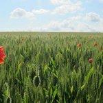 field nearby