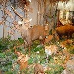 あくあぴあ芥川の展示(摂津峡や山間部には鹿や猪がいます)