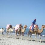 i cammelli sulla spiaggia