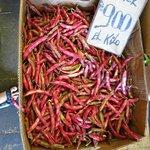 chilean legumes