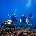 Potápanie ašnorchlovanie