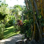 Garden path to the Rain Forest Casita